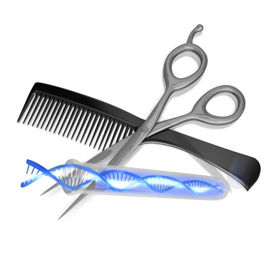 Can We Get DNA From a Hair Sample for Genealogy?